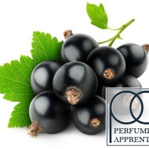 The Flavor Apprentice Perfumers Blackcurrant Flavour Concentrate
